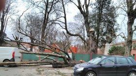 """V Česku se opět zvedá vítr: Škody jsou do milionů, proud už energetici """"nahodili"""" všem"""
