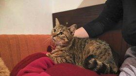 Kočičí smolaři budou hledat domov: V Řepích se představí na jarní umisťovací výstava koček