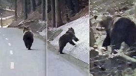 VIDEO: V Beskydech natočil medvěda! Pobíhal kolem silnice a vůbec se nebál