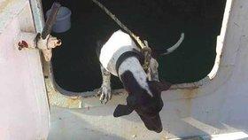 Pejsek omylem cestoval po moři 2000 km. Než se našla jeho panička, utratili ho