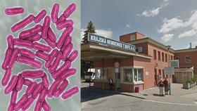 Salmonelóza byla v kuřeti s rýží. Oběd ve zlínské nemocnici skolil 68 lidí