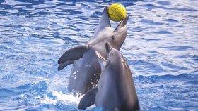Turisté mají utrum, s delfíny si už nezaplavou. Vláda vydala přísné nařízení