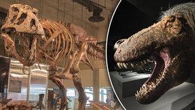 """Vědci poskládali rekordního tyrannosaura: """"Drobeček"""" měřil 13 metrů a vážil 10 tun"""