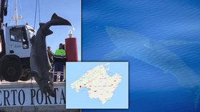 Zděšení v dovolenkovém ráji Čechů: Z moře vytáhli čtyřmetrového žraloka