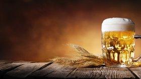 Experti varují: Kvůli suchu není ječmen, pivo může zdražit i na dvojnásobek
