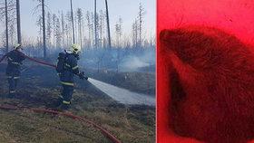 Na Moravě hořely hektary lesa: Hasiči zachraňovali, co se dá!