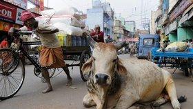 Krávy důležitější než ženy? Kvůli dojnicím chtějí zakázat lék důležitý při porodech