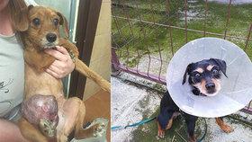 Zbídačení psi se pářili s příbuznými a měli obří nádory: Ochránci zvířat nevěřili vlastním očím