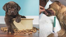 Bojíte se, že se pes zadusí u krmení? Tohle byste nikdy neměli dělat!