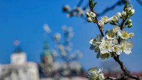 V Česku bude tepleji než v Řecku. Velikonoční týden může přinést i letních 25 °C