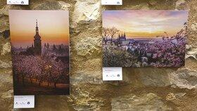 Svítání nad městem i ladné labutě u Vltavy: Výstava fotek v Jindřišské věži ukazuje všechny krásy Prahy