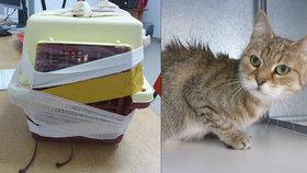 Vyděšená a obalená ve vlastních výkalech: K popelnicím na Opatově někdo vyhodil kočku v přepravce