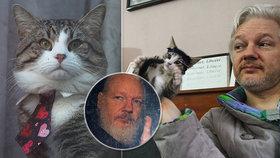 Kam zmizela jeho kočka? Mazlíček zatčeného zakladatele WikiLeaks prý skončil v útulku