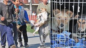 Brutální týrání psů v romské osadě: 9 se jich podařilo zachránit, dalších 20 na záchranu čeká