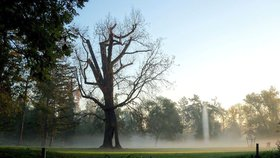 Jeden z nejstarších obyvatel Stromovky šel k zemi: Honosný dub přežil blesk i povodně, zahubili ho lidé