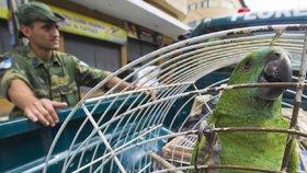 Papoušek v Brazílii varoval dealery před policií. Výslech se nepovedl, držel zobák
