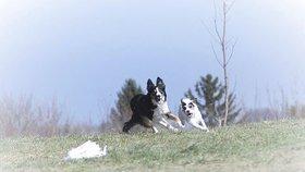 Který pes má největší »fofry«? Vítěze určí závody Speedmaster, které se konají o víkendu v Ješíně