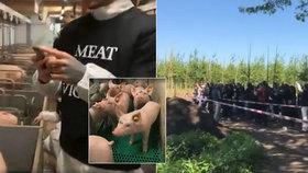 Čeští aktivisté obsadili farmu holandských prasat: 14 hodin v cele a převrácená auta