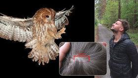 Běžec v Plzni skončil s podrápanou hlavou: Napadla ho bojovná sova!