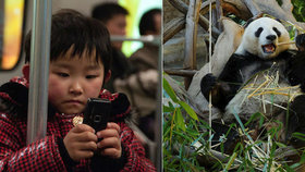 Po lidech i pandy: Chlupáče ohlídá nová aplikace, rozezná jejich obličeje