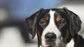 Pes na Prostějovsku potrhal ženu v obličeji: Byly s ním už dřív problémy, tvrdí policie
