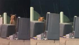 """""""Vidím tě!"""" Medvěd si zahrál u popelnic s policistou na schovávanou"""