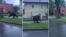 V ulicích okresního města běhal obrovský medvěd: Lidem se ho podařilo natočit!