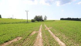 Vyprahlé Česko: Z mapy zmizely tři nejhorší stupně sucha. Déšť pomohl, vyhráno ale není