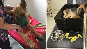 Sedmiletý chlapec prý téměř ubil psa tyčí: Zvíře bojuje o život na veterině