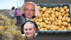 Kilo brambor je za astronomických 30 korun. Levněji jen tak nebude, ví expert