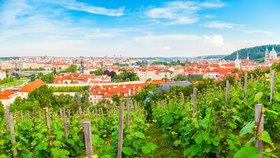 Poznejte krásu českých vín!