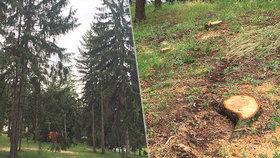V chráněných Riegrových sadech se kácelo: Stromy napadl kůrovec, smrky musely k zemi