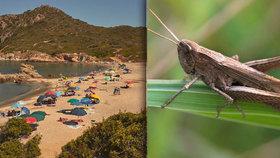 Dovolenkový ráj Čechů pustoší miliony kobylek. Invaze hmyzu je nejhorší za 60 let