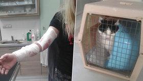 Kočka, kterou žena našla v lese, zaútočila:  Poškrábaná majitelka musela zavolat strážníky