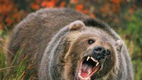 """Houbaři, pozor! Na jižní Moravě běhá v lesích medvěd: Chystá se """"emigrovat"""" do Rakouska"""