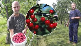 Manželé Machů pečují 20 let o třešňový sad: Přijďte si nasbírat, kilo máme za 25 korun