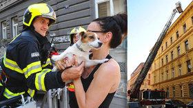 Chlupáčovo ranní dobrodružství: Vykračoval si po střeše třípatrového domu, psa museli zachránit hasiči