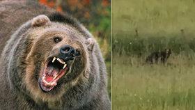 """Na Valašsku se objevil medvěd. """"Skočil mi přes cestu,"""" tvrdí autor videa"""