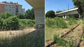 """Holešovická """"džungle"""" u řeky mizí. Díky novému parku odstraní radnice i betonové plácky"""