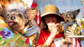 Nejošklivějším psem světa se stal Toulavý Rošťák: Roztomilý hnusák má vypoulené oči a špičaté uši