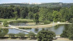 V Praze přibylo 160 tisíc stromů: Ulice ale neochlazují, říká dendrolog. Proč?