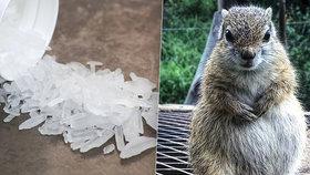 Muž krmil veverku pervitinem: Chtěl vytvořit superbojového tvora