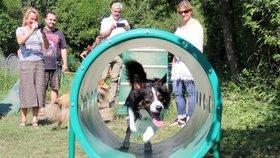 Ve Stodůlkách mají překážkovou dráhu pro psy: Obyvatelé si ji vymodlili na radnici