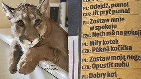 """""""Jít pryč puma!"""" Zfušovaný polský slovník o české šelmě vás dostane do kolen"""