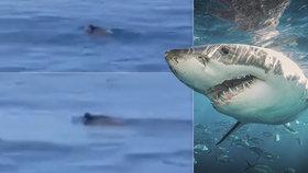 Další video žraloka u břehů Jadranu? Neuvěříte, co Chorvati natočili!