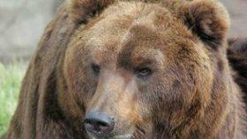 Brněnská zoo se zahalila do smutku: Oblíbeného medvěda museli utratit!