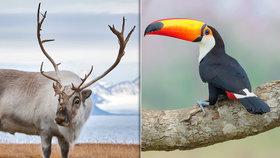 Zvířata z celého světa na Staroměstské radnici: Porotci Czech Nature Photo vystavují svá díla