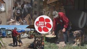 Podivín žije se smečkou ovčáků, psi ohrožují místní. Týrání, mají jasno veterináři