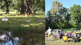 Ve Stromovce umírají labutě! Lidé upozorňují na traviče, na vině jsou ale spíš návštěvníci