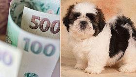 """Krutý podvod: Žena zaplatila za štěně """"kamerunské bance"""" 65 000 korun"""